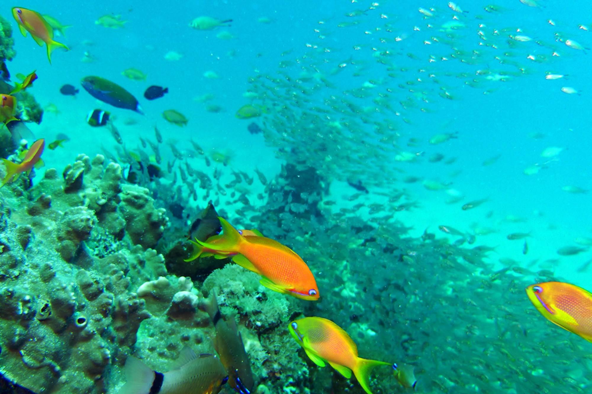 Zanzibar Coral Gardens