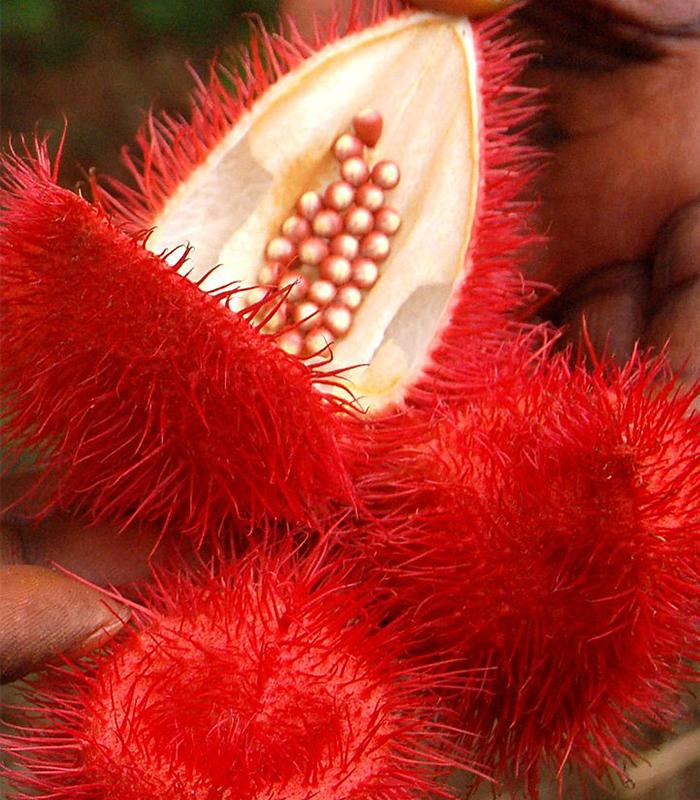 PEMBA SPICE FARMS