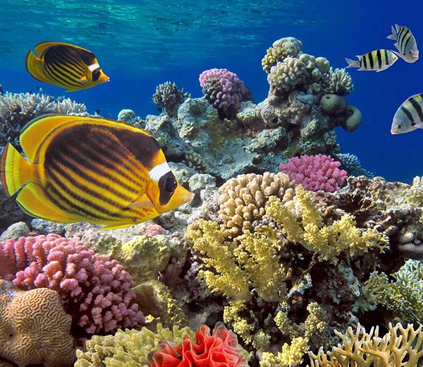 Fundu Reef Coral Site - Zanzibar-Coral-Sites