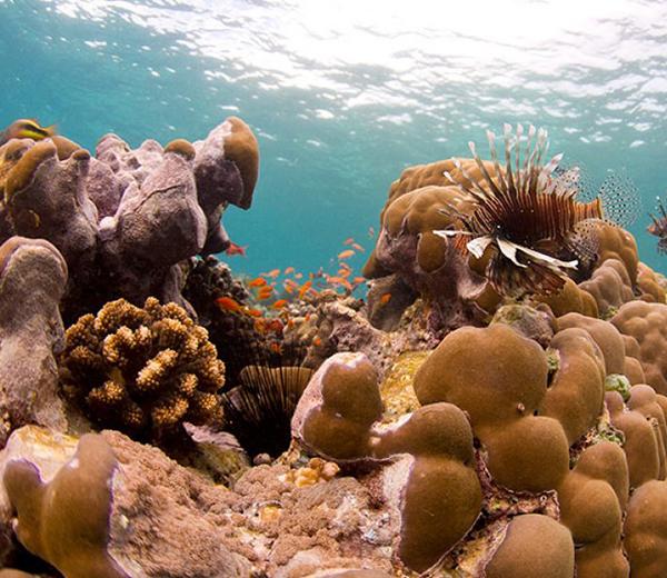 Misali Island Coral Site - Zanzibar-Coral-Sites