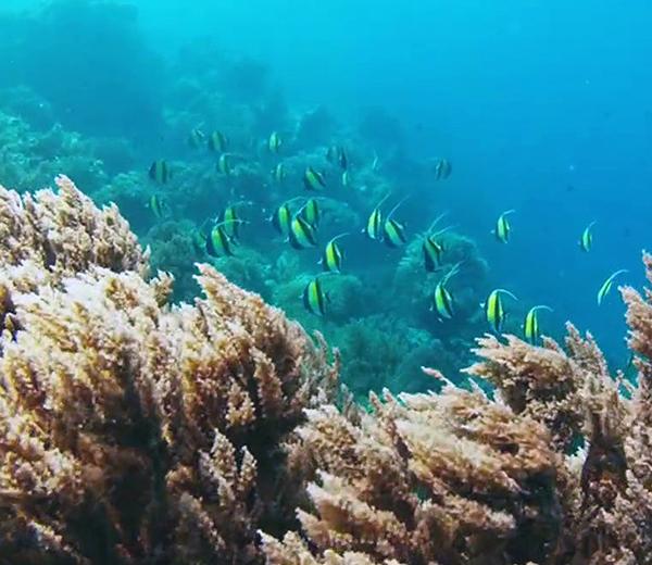 Mnemba Coral Site - Zanzibar-Coral-Sites