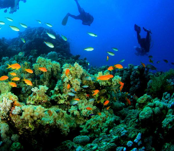 Njao Gap Coral Site - Zanzibar-Coral-Sites