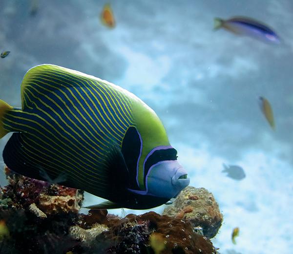 Pange Reef Coral Site - Zanzibar-Coral-Sites
