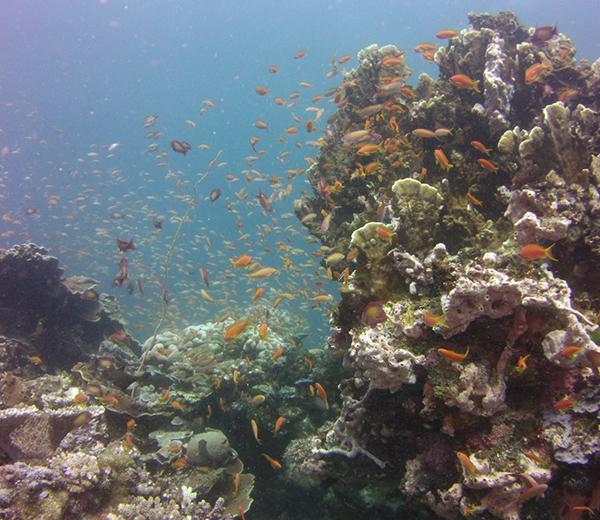 Popo Island Coral Site - Zanzibar-Coral-Sites