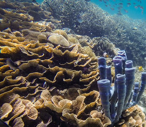 Ras Kinunduni Coral Site - Zanzibar-Coral-Sites