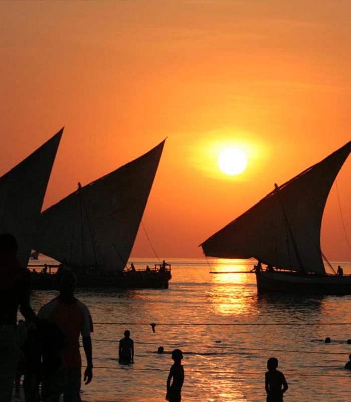 Safari Blue Sea Adventure